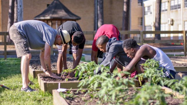Produce in Every Neighborhood: Sow Reap Feed